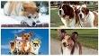 psy vo filme - koláž
