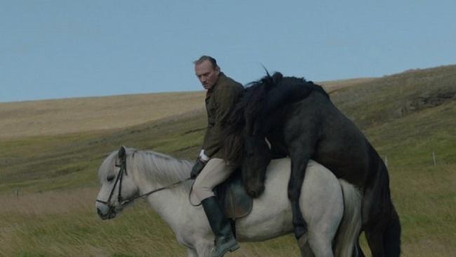 O koňoch a ľuďoch